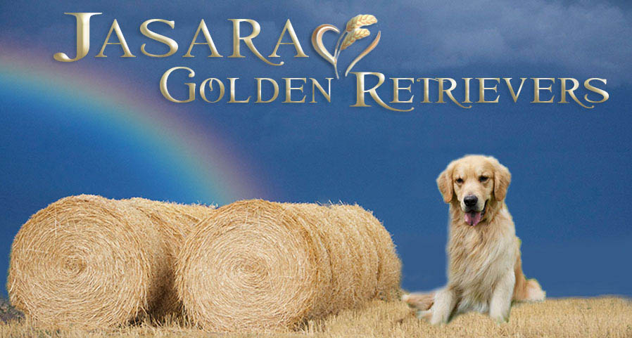 golden retrievers breeders nebraska, golden retriever puppies nebraska, golden retriever stud dogs nebraska, golden retrievers nebraska, jasara golden retrievers, jasarsa golden retriever header,